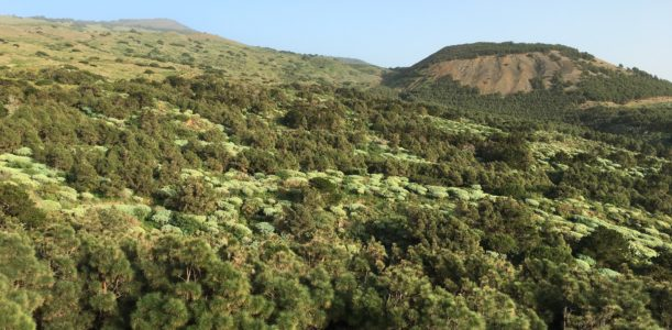 Walking on El Hierro, the land that time forgot